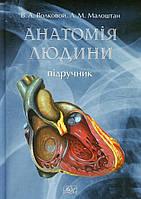 Анатомія людини. Підручник. Волковой В.А. Млоштан Л.М.
