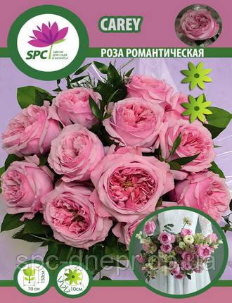 Роза романтическая Carey