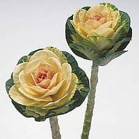 Насіння капусти декоративної Кондор Ерлі Вайт, 5 насінин