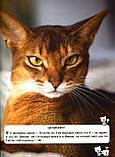 Кішки. Світ навколо нас. Протасовицька Тамара, фото 4
