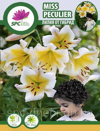 Лилия ОТ гибрид Miss Peculier, фото 2