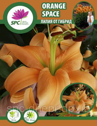 Лилия ОТ гибрид Orange Space, фото 2
