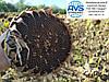 Семена подсолнечника Дозор. Гибрид высокоурожайный 40 ц/га, олийность 53%, Подсолнечник Дозор ранний 105 дней.
