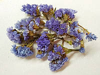 Сухоцвет Статица голубая, фото 1