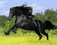 Раскраска по цифрам Конь вороной (VP472) 40 х 50 см, фото 1