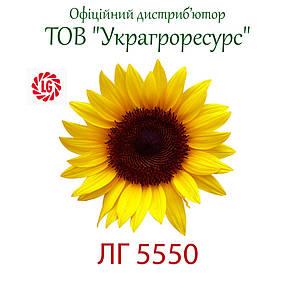 Семена подсолнечника Лимагрейн ЛГ 5550