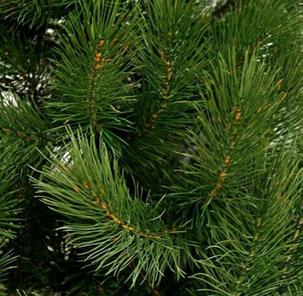 Сосна Литая зеленая Люкс 1.8 м, фото 2