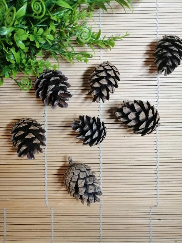 Шишки натуральные, 5-6 см