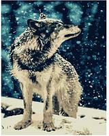 Картина Brushme по номерам Одинокий волк 40 x 50 cм def.GX7483, КОД: 1341276