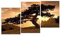 Модульная картина Декор Карпаты 100х53 см Дерево M3-t163, КОД: 184354