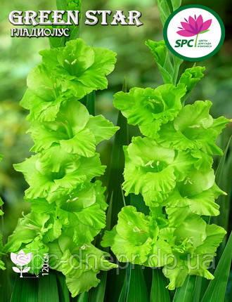 Гладиолус Green Star