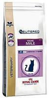 Ветеринарная диета для кошек Royal canin Young Male (для кастрированных котов) 400гр