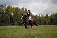 Активные конные прогулки (рысь, галоп)