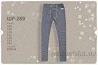Термобелье для мальчика Bembi брюки ШР289 128 цвет синий