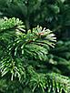 Ялинка Nordmanniana 1.50 - 1.75м, фото 4