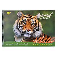 Альбом для рисования А4 30л/100 Wild force на спирали мат.лам+УФ-выб+фол сер YES код: 130391, фото 4