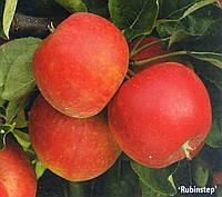 Саженец яблони Пируэт(Рубинстеп),(Чехия)