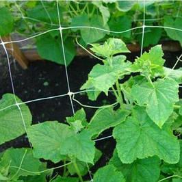 Сітки для рослинництва