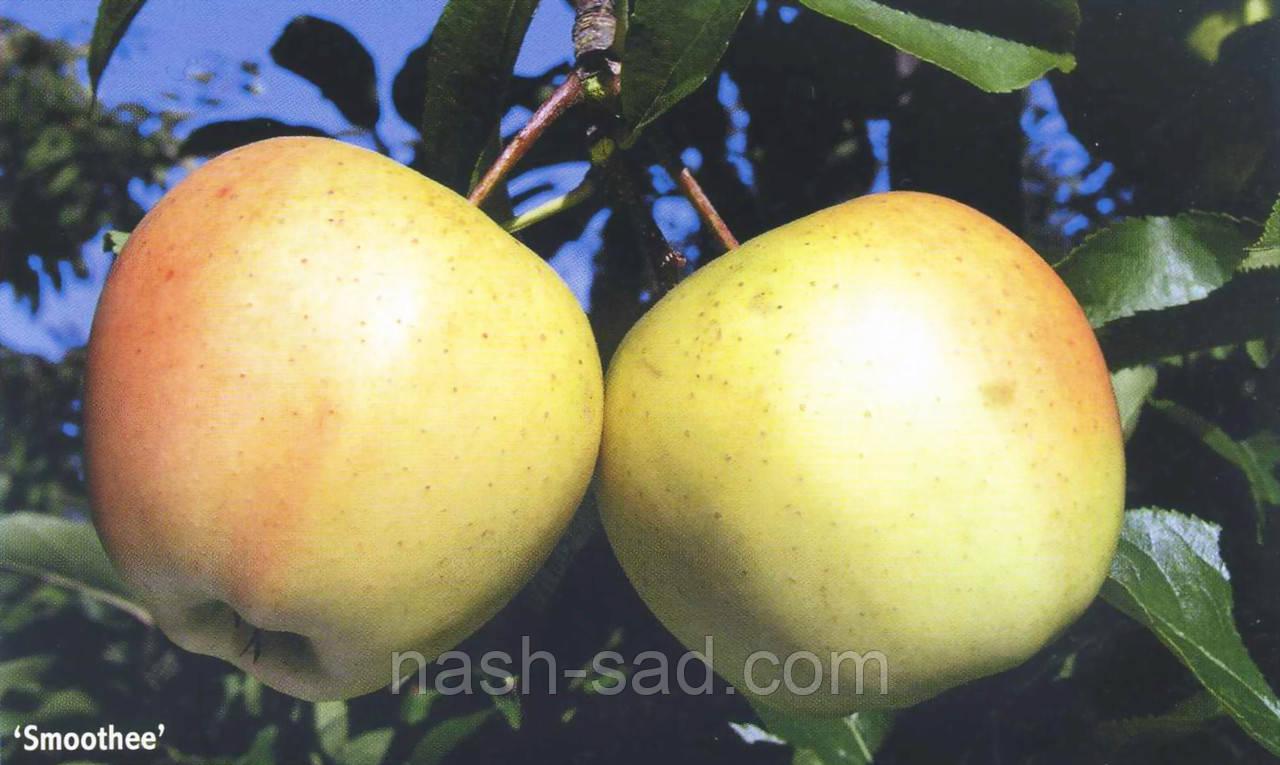 Саженцы яблони Смути /Гибсон Голден Делишес/ ( США )