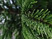 Ялинка Nordmanniana 1.50 - 1.75м, фото 7
