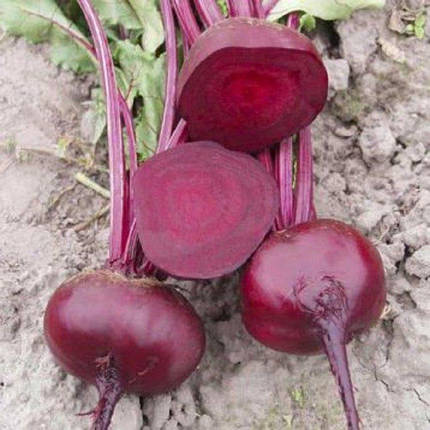 Семена Свекла Водан F1 20 гр Bejo Zaden 2154, фото 2