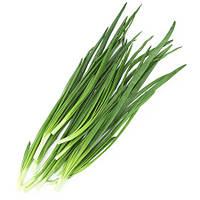 Зеленый лук. Приправа к соусам