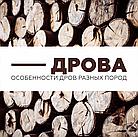 Дрова. Особливості дров різних порід.