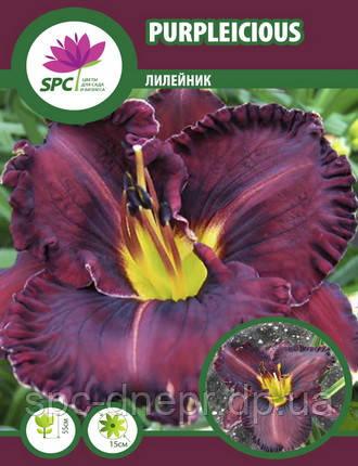 Лилейник  Purplelicious