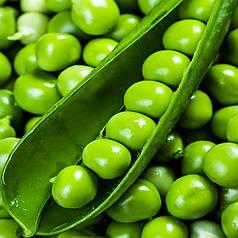 Насіння Горох овочевий Преладо 10 гр Syngenta 2019
