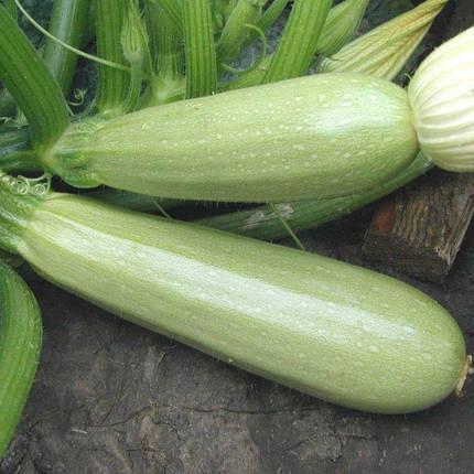 Семена Кабачок Каризма F1 10 сем Syngenta 2028, фото 2