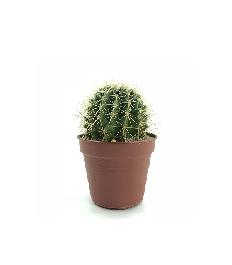 Для кактусів і сукулентів