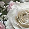 """Фотообои 368x254мм, KOMAR """"Floraison"""" (8-736)"""
