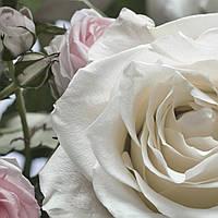 """Фотообои 368x254мм, KOMAR """"Floraison"""" (8-736), фото 1"""