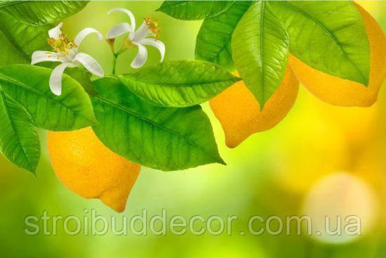 3Д Фотообои лимон  разные  текстуры , индивидуальный размер