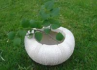 """Кашпо садовое из полистоун 11х19х19,5 см. """"Перламутровая ракушка"""" белое, фигурное"""