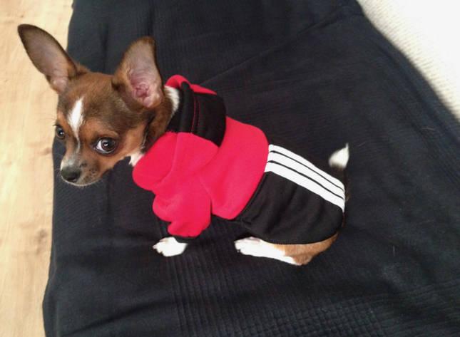 Одежда для собак зимняя мягкая толстовка одежда для чихуахуа теплая одежда для собак зимняя одежда для собак д L, фото 2