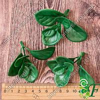 Самшит зеленый Крупные листья _ 100 грамм