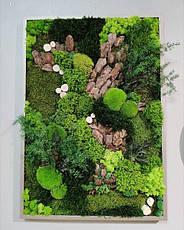 Готові картини з стабілізованого моху і рослин