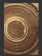 """""""Срез дерева"""" з центральной подсветкой, фото 3"""