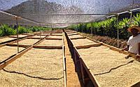 Особенности кофе от способа обработки зерен