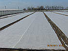 Агроволокно 23 белый 15,8*50 Усиленный край, в наличии также рулоны длиной 55м, 175м, 180м., фото 5
