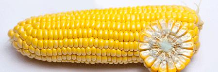 Семена Кукуруза сахарная Бондюэлька F1 (ГСС 3071) 50 г Syngenta 2189, фото 2