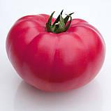 КС 3811 F1 / KS 3811 F1 - Індетермінантний Томат, Kitano Seeds. 500 насінин, фото 2