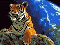 """Картина по номерам на холсте """"Тигр"""" e084"""