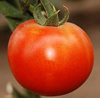 ПЬЕТРО F1 / PIETRO F1 – томат индетерминантный, Clause 250 семян