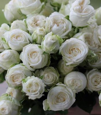 """Троянда спрей """"Місс Бомбастік"""""""