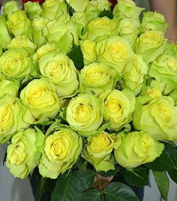 """Троянда ч/г """"Лімбо"""""""