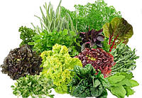 Травянистые растения, салат, специи