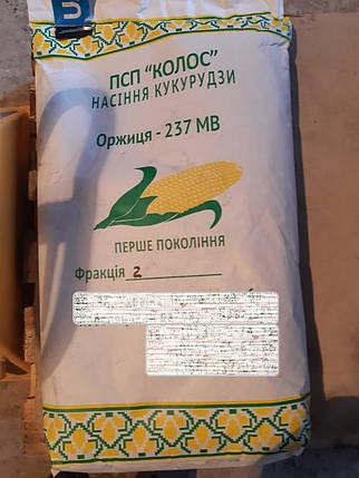Насіння кукурудзи Оржиця 237 МВ, фото 2