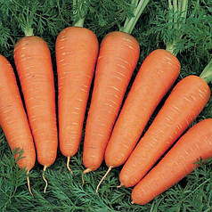 Семена Морковь Канада F1 1 гр Bejo Zaden 2069